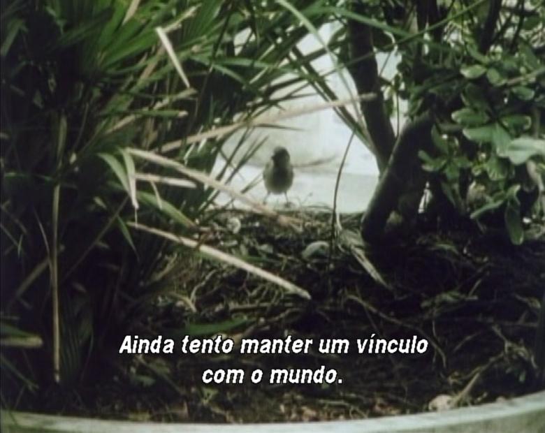 Diario 1973 - 1983 imagem de texto 02