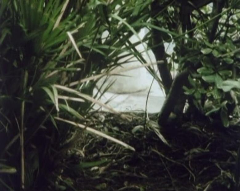 Diário 1973 - 1983 imagem de texto 03